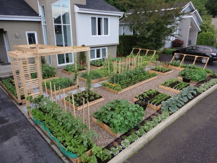 Vorgarten gestalten als Gemüsegarten-Gemüsebeete und Rankhilfen - vorgarten moderne gestaltung