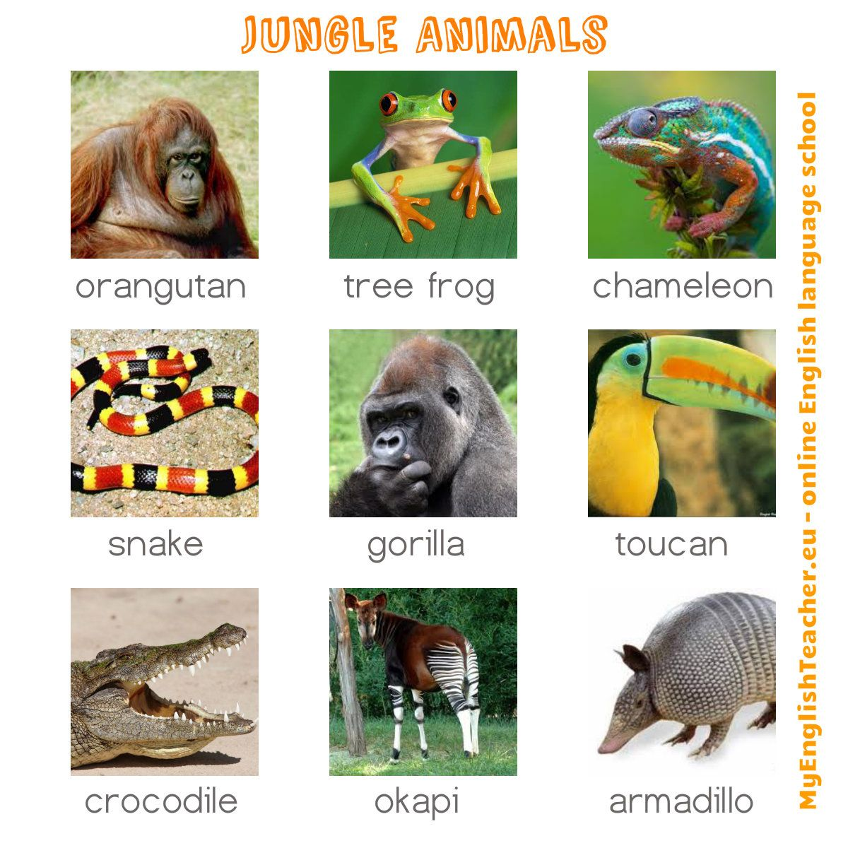 Jungle Animals English Worksheet