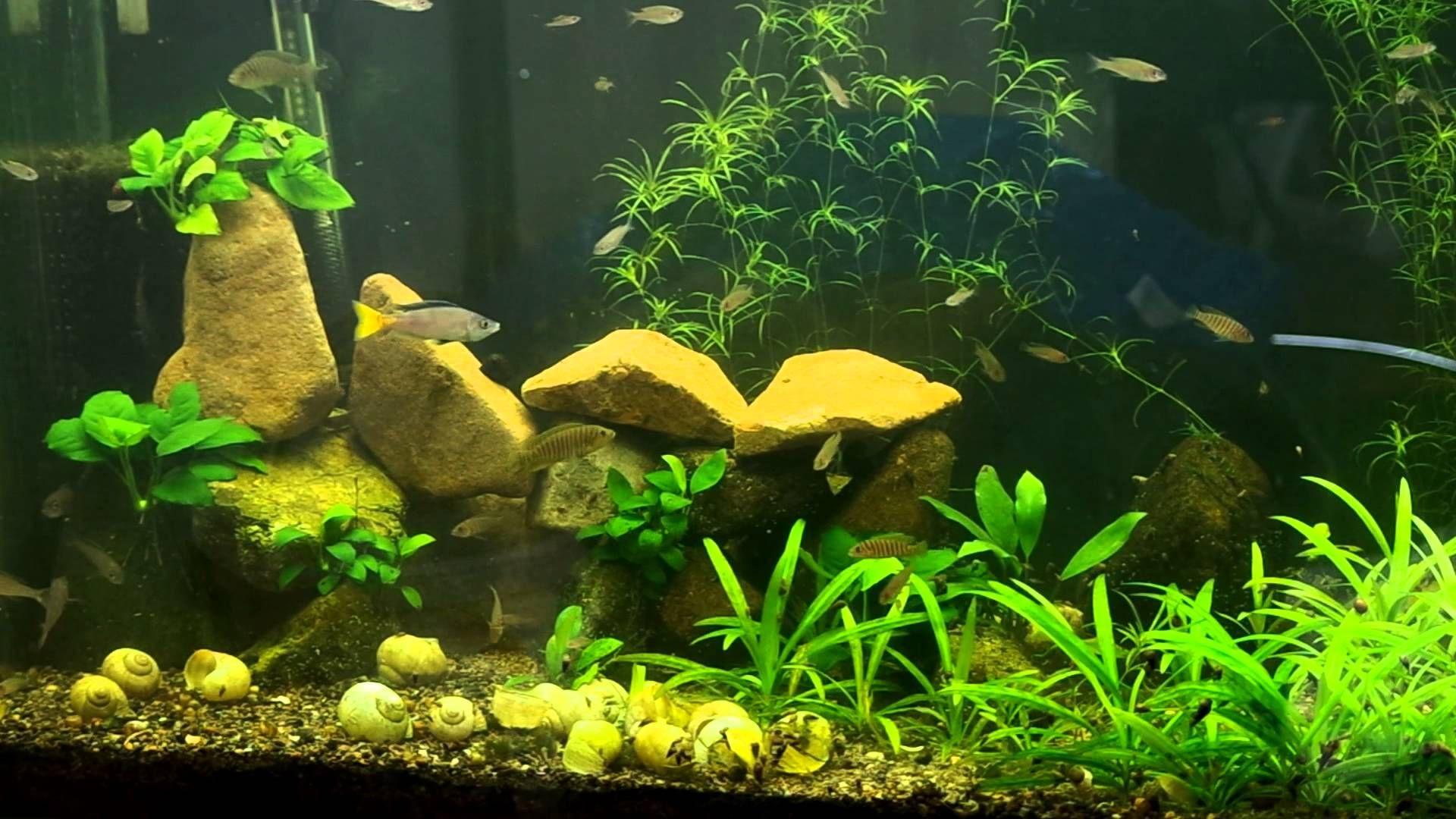 Tanganyika in liters aquarium reef tank stuff for datty