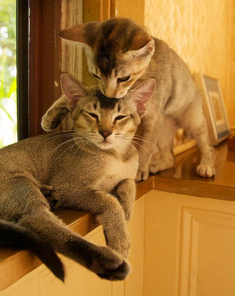 Pin By Deep Blue On Cats Pet Birds Cute Animals Animals