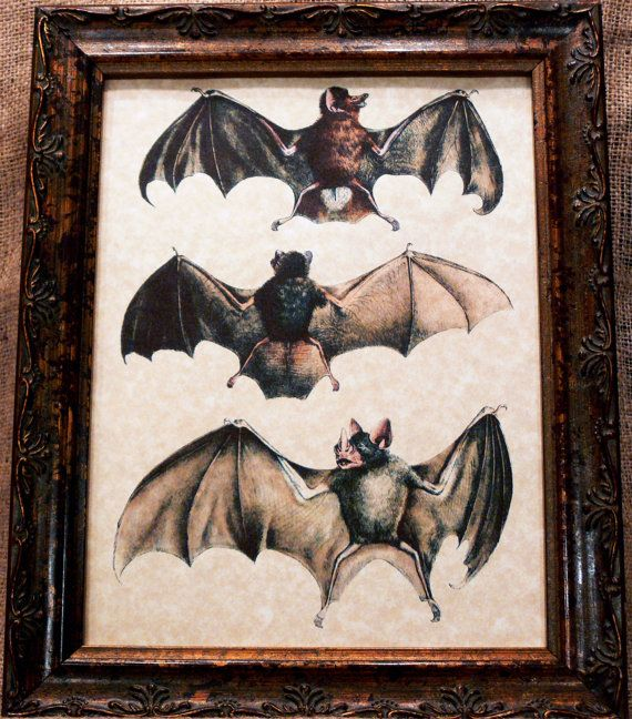 Three Bats Art from 1856 Art Print on Parchment by apageintime, $7.50
