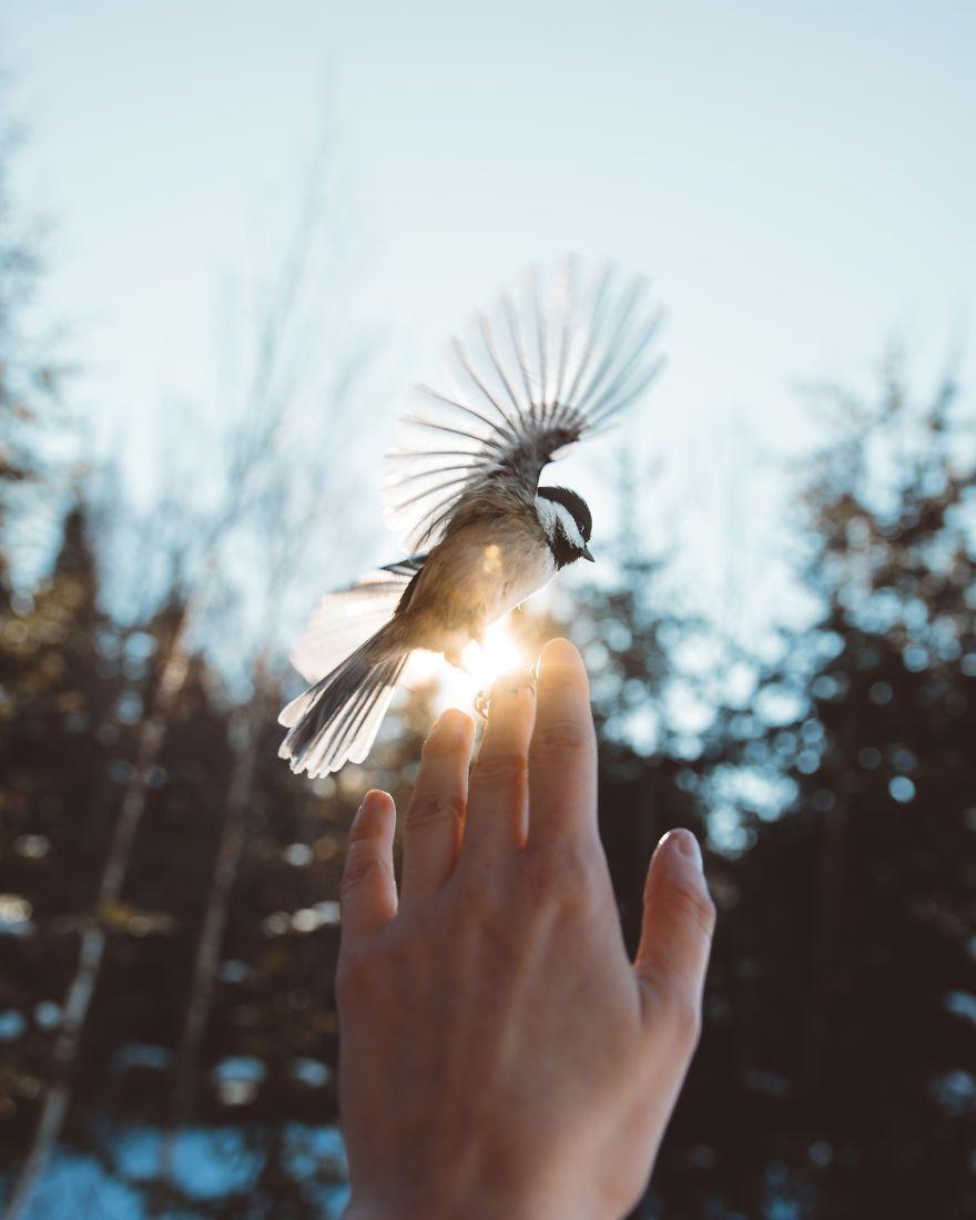 How I Got Seduced By Wildlife Photography #wildlifephotography