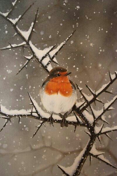 Tweet Tweet Uccelli European Robin Beautiful Birds Birds