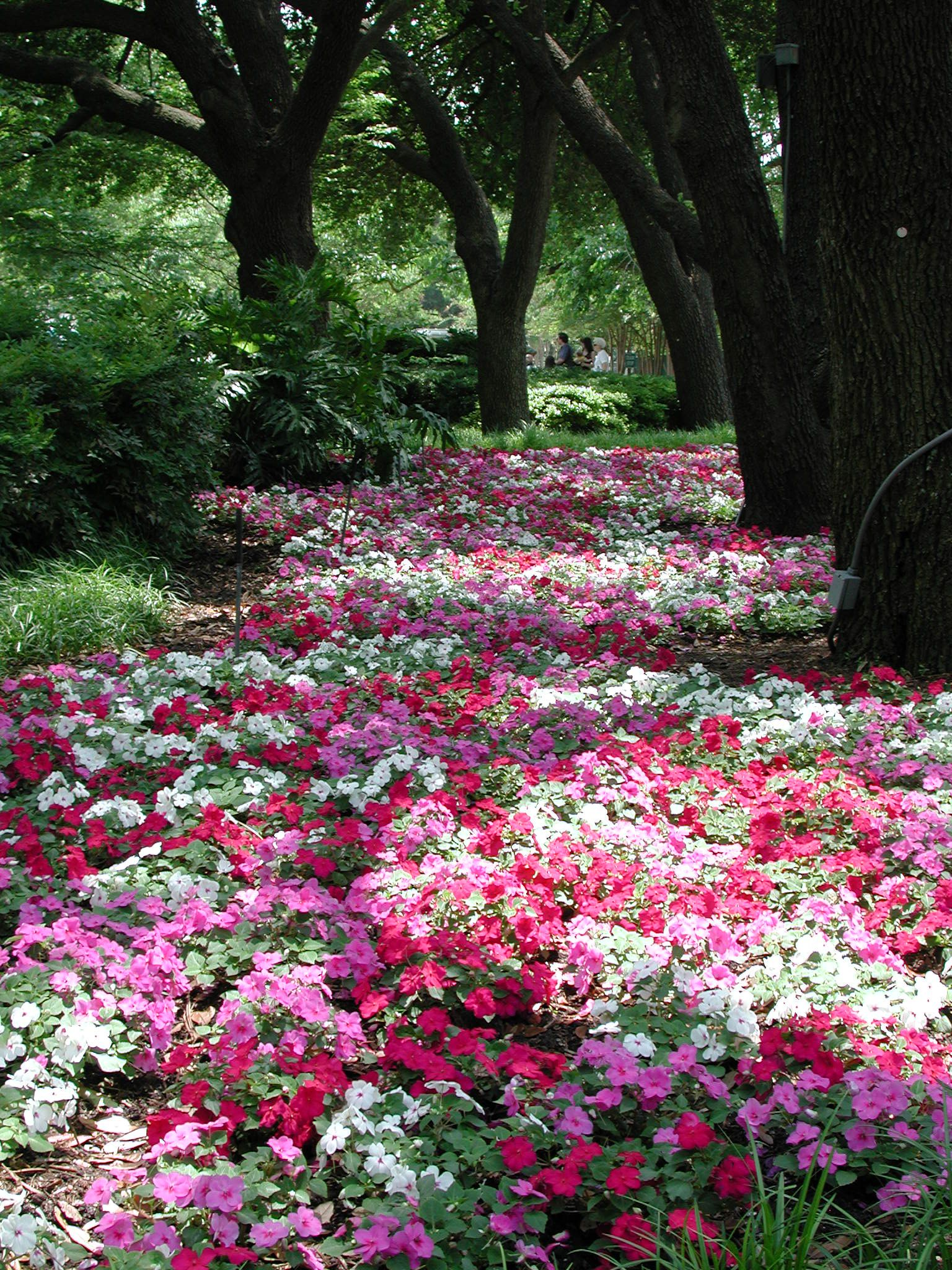 Landscaping Ideas From The Dallas Arboretum Beautiful Gardens Plants Dream Garden