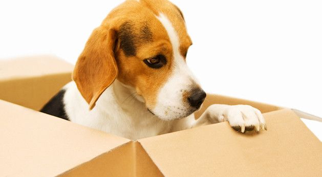 Simple Tips For Moving With Pets (With images) Moving