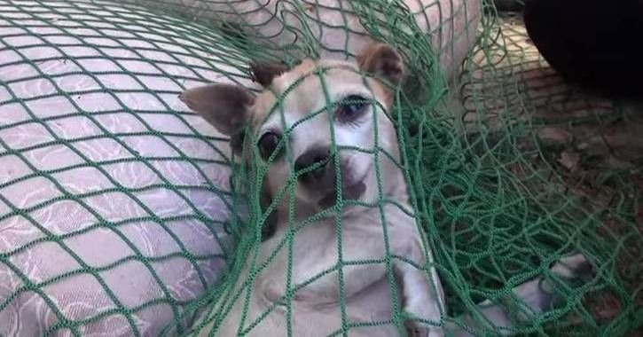 Hope for Pawsis an animal rescue league. Recently, they got a call about an injured Chihuahua. What they do with her is absolutely remarkable.