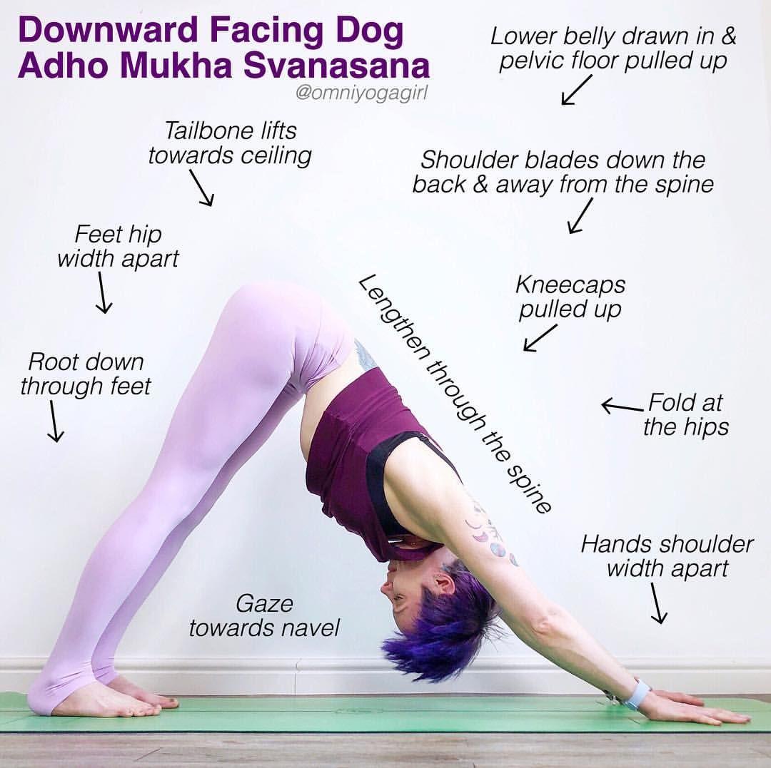 Downward Facing Dog Navel