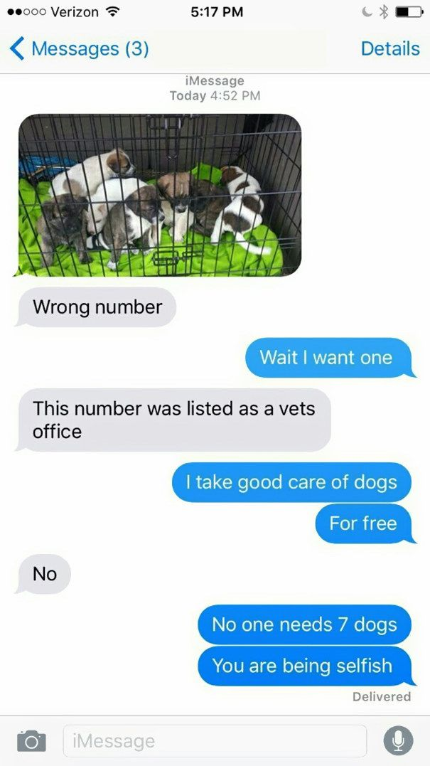 The Free Puppies: