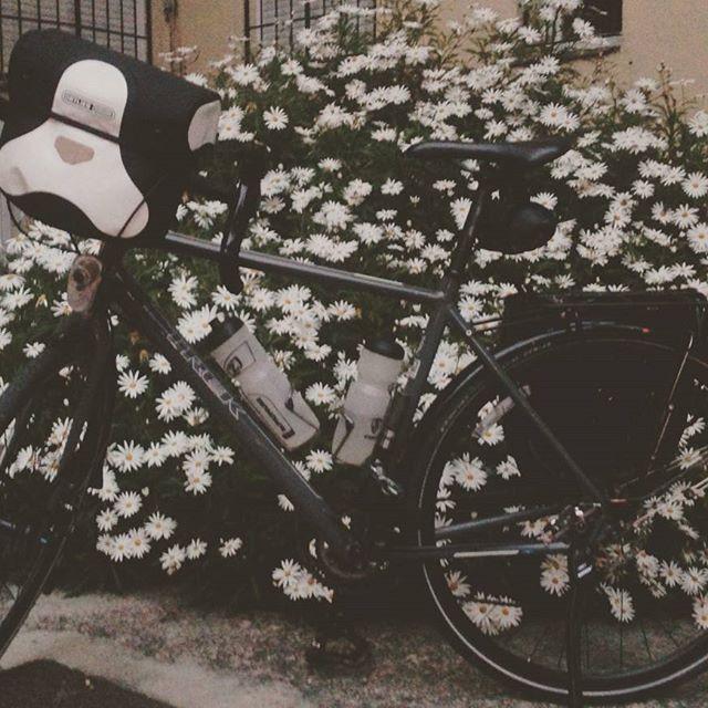 Día 18. Desde mi bici siento más la primavera. #30diasenbici #30daysofbiking #Altrabajoenbici