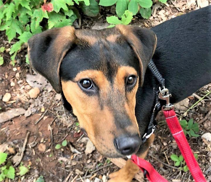 Adopt Maui on Petfinder Help homeless pets, Homeless