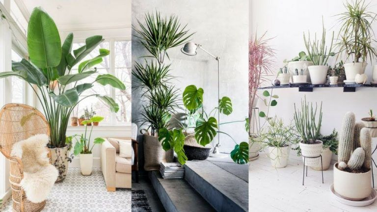 32 Lovely House Plants In The Living Room Ideas Interior Design Ideas Home Decorating Inspiration Moercar Popular House Plants Indoor Plants Bedroom Plant Decor Indoor