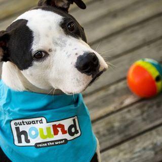 Outward Hound | Engaging Dog Toys, Dog Games & Gear