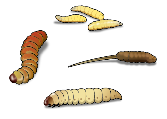 Four best worms for ice fishing and how to use themyou for Best worms for fishing