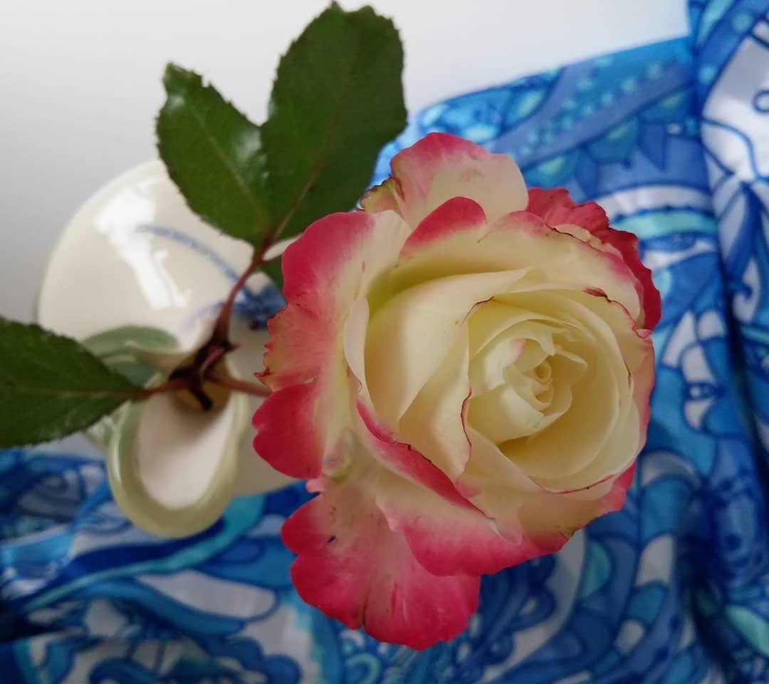 Moj Sad Gardenroses Plants Flowers Rose