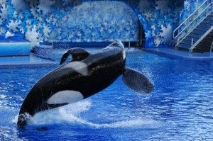 Support Groundbreaking Orca Legislation  Please SIGN & SHARE Petition! FREE WILLY!!!!