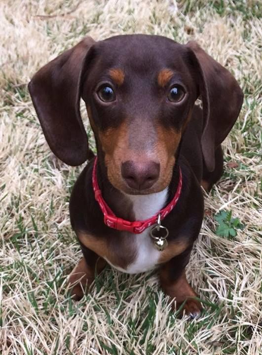 Not Quite Green But I Love Sitting In The Grass Otto Von Doxie