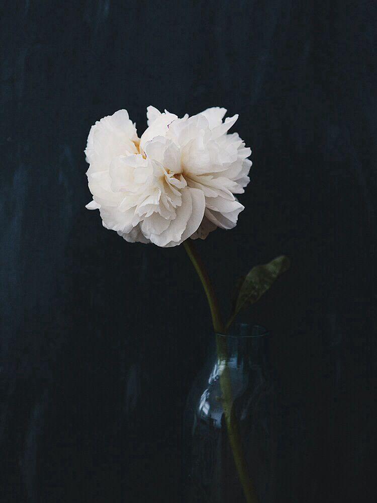 Pin By Pilar J Bradford On Artistic Ideas Flowers Beautiful
