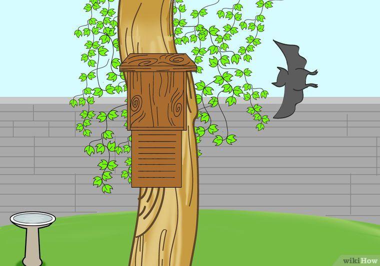 Attract bats to your garden how to attract bats garden
