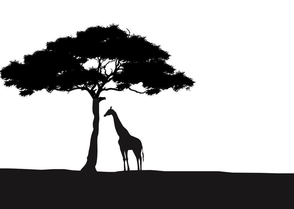 African Giraffe And Acacia Tree Silhouette Wall Art