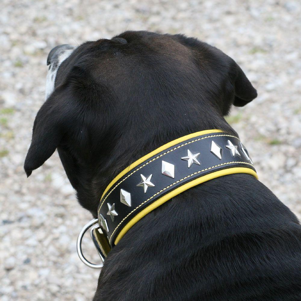 Victorian Bulldog Puppies For Sale Ontario Ideas
