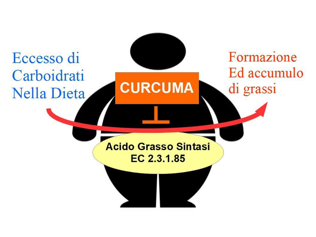 dieta dimagrante con curcuma