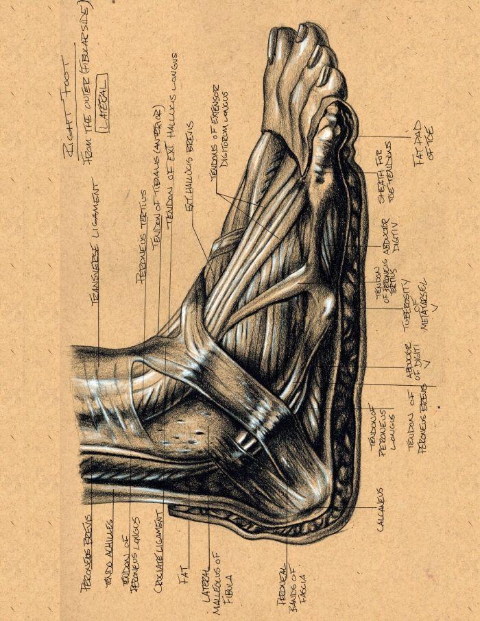 Foot Anatomy by Brett Golliff