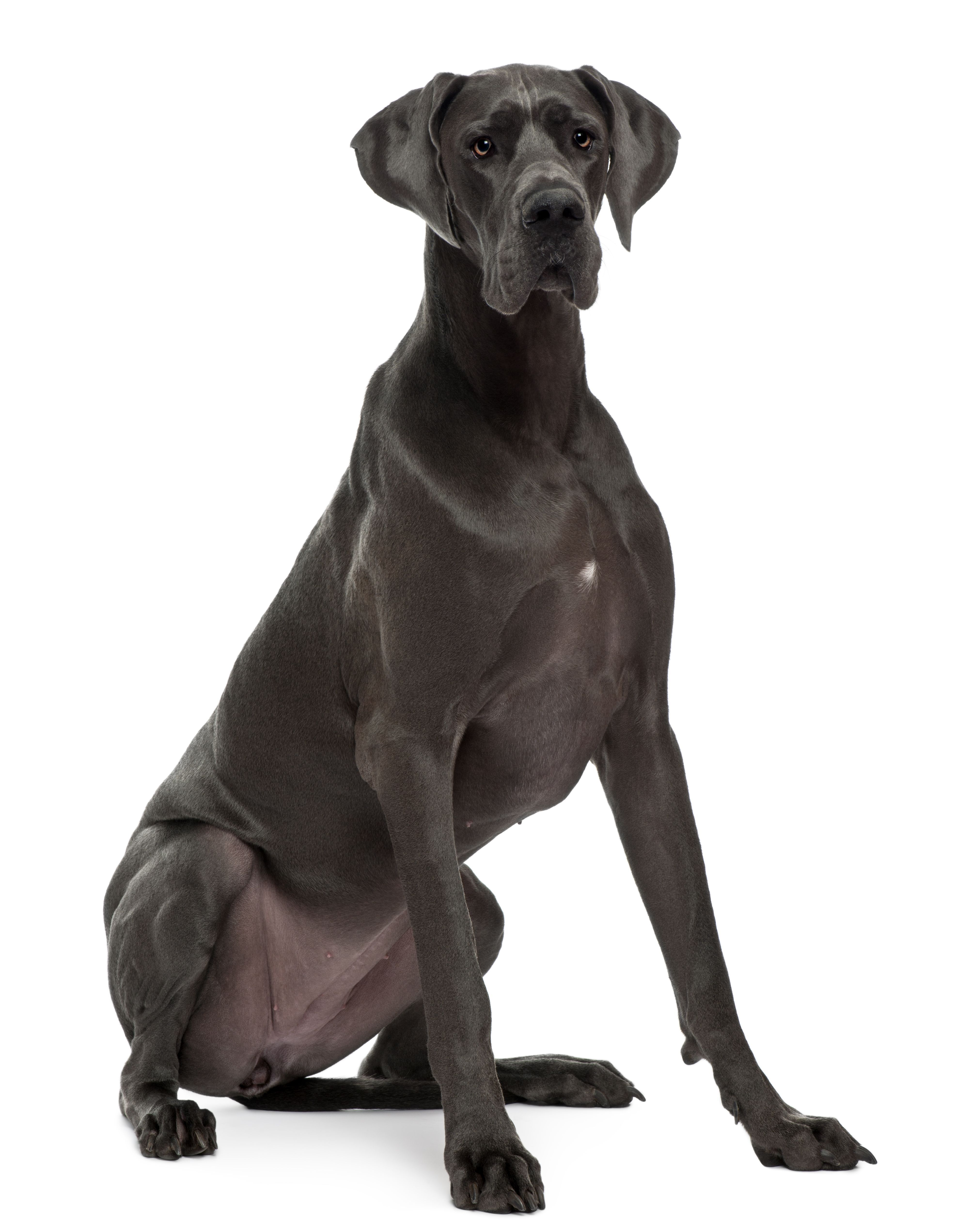 Dominick Gabone Dane Dog Dog Mafia Inc Take A Look At The Mafia