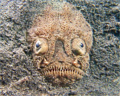 u-th dating syvänmeren koralleja