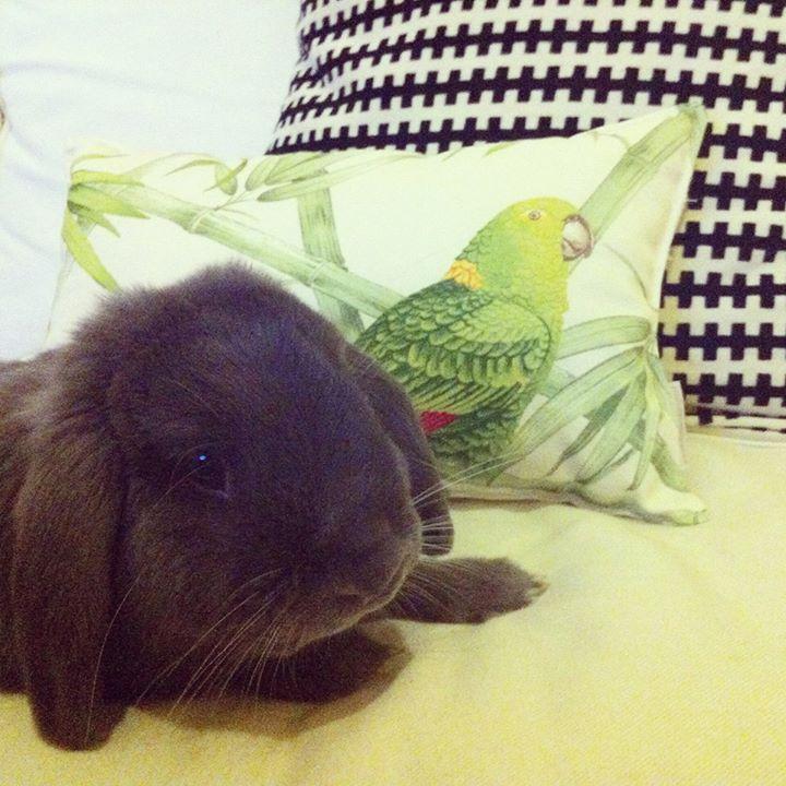 Lemon & Ginger #pillow #home #homesweethome #ikea #ikeaportugal #tropical #tropicalmood #summer #bunny #bunnylove
