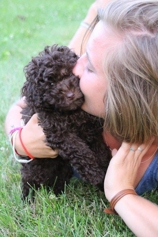 LOVE   Oliver poodle puppy - Edyta Sitar of Laundry Basket Quilts