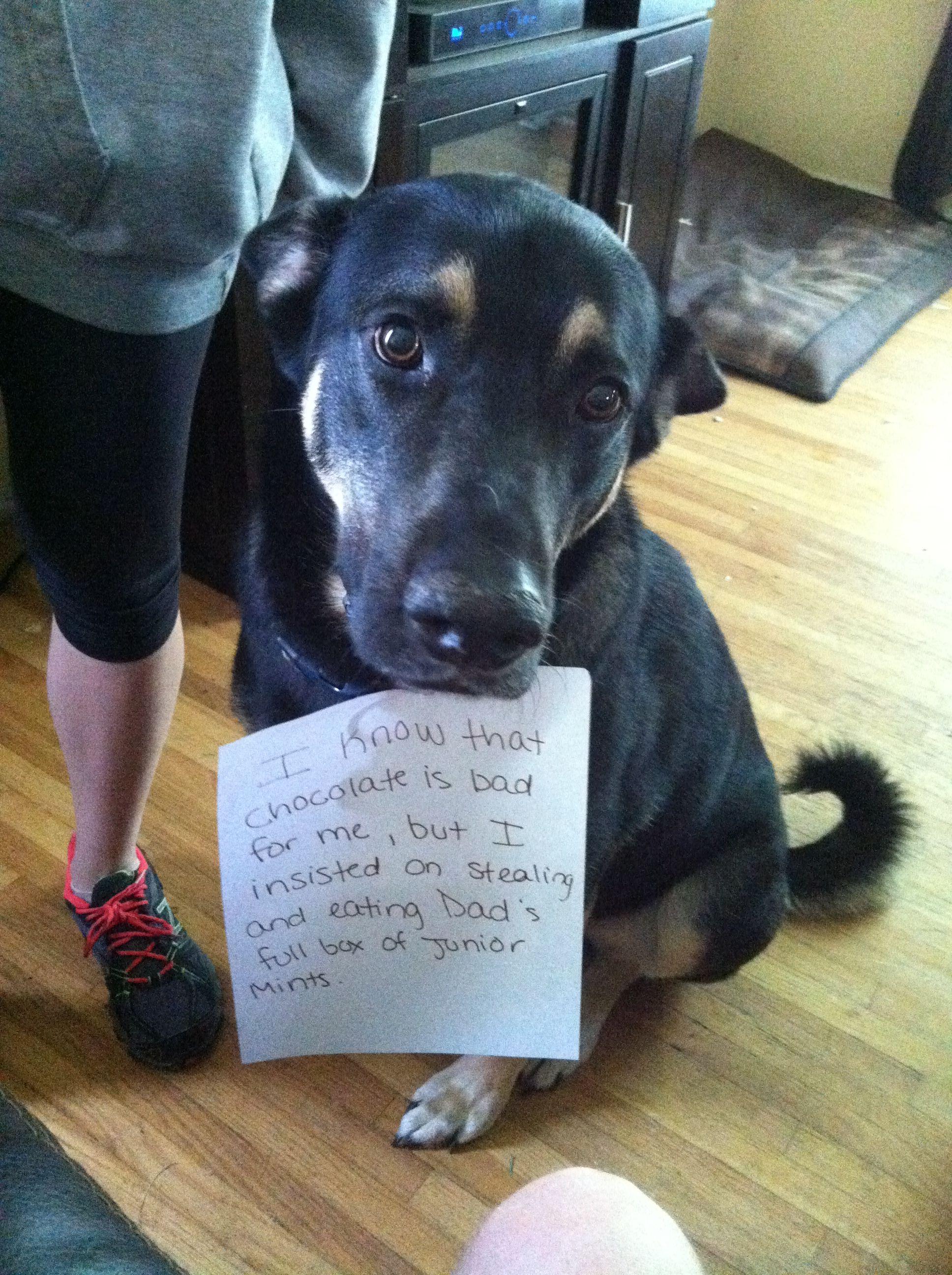 Dog shaming my poor Rambo