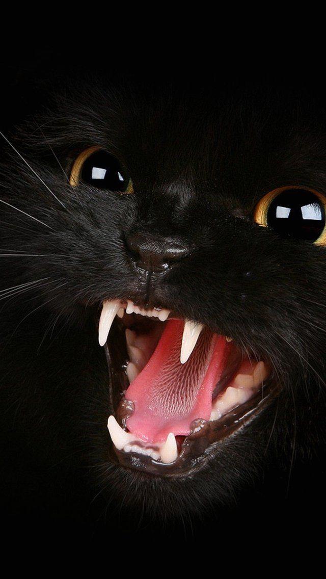 Grumpy Cat Wallpaper for Computer Wallpapers For Desktop