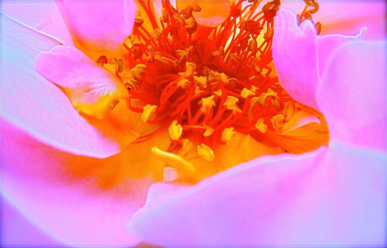 Digital Download Flower Garden Nature Photography Fire Pink Orange