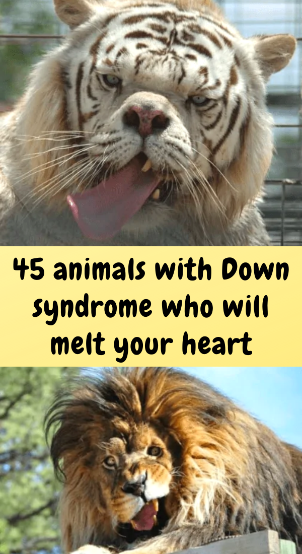 Pin on Animals with Down syndrome