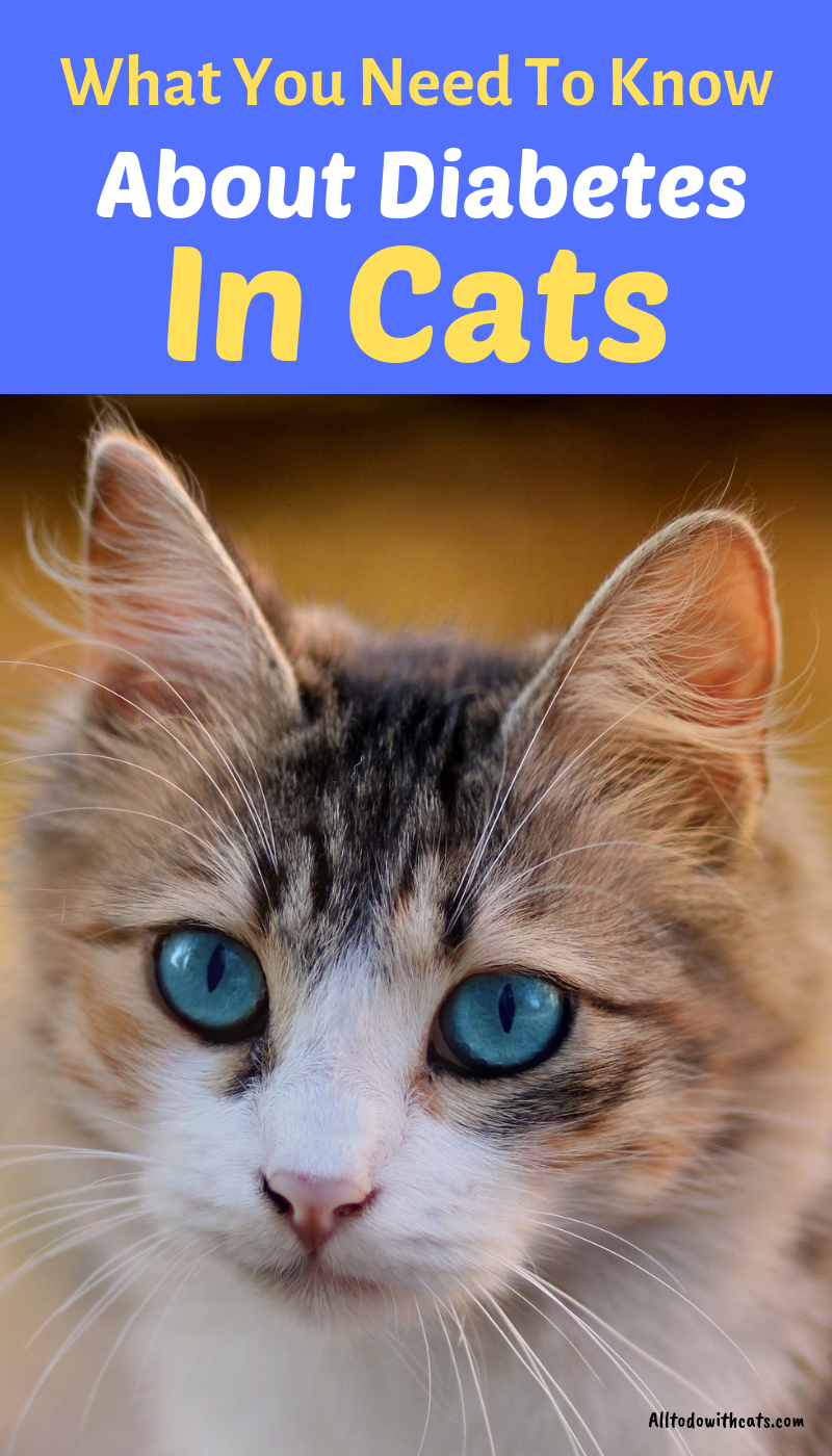 What Is Diabetes In Cats Symptoms Causes And Treatments All To Do With Cats Diabetes Cat Cat Diseases Cats
