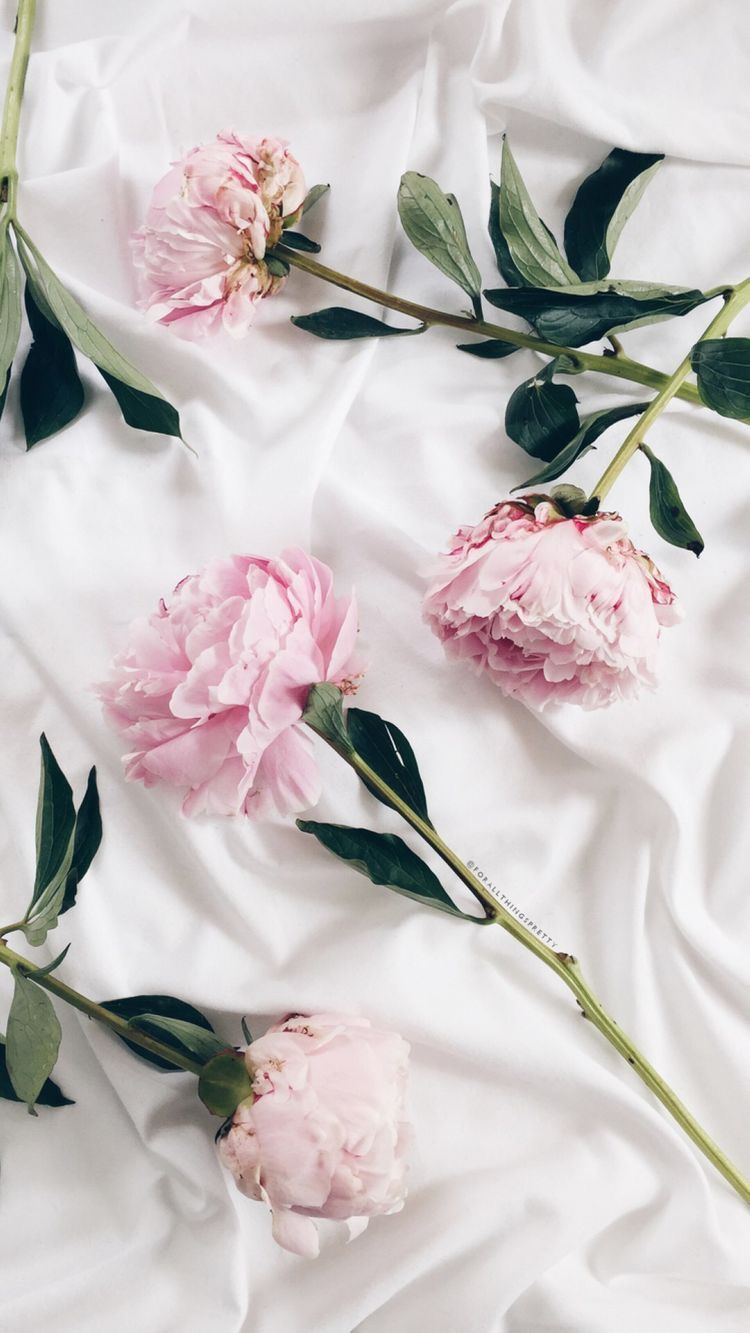 iPhone/ phone wallpaper white with pink roses