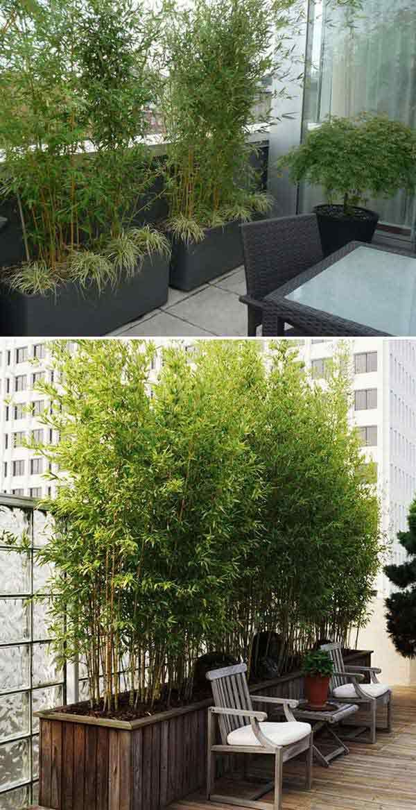 Add Privacy to Your Garden or Yard with Plants | Gardens, Growing ...