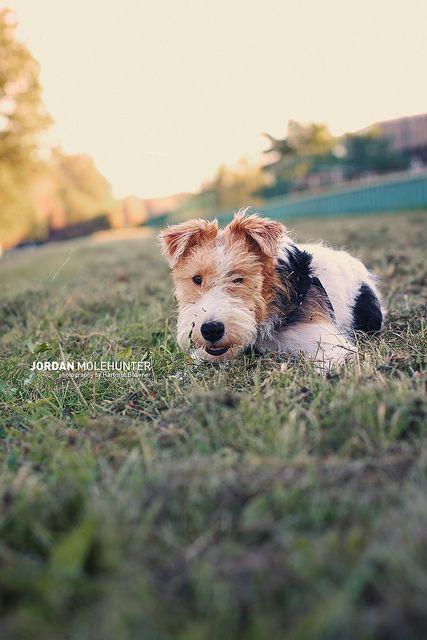 Untitled Mit Bildern Hunde Tiere Terrier