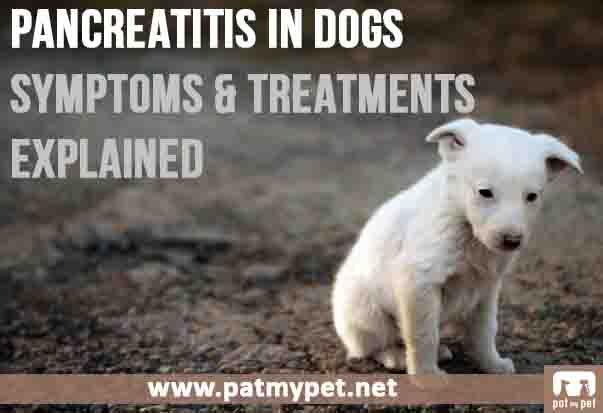 Pat Best Friends Dog Leash
