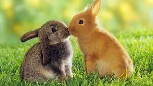 Resultado De Imagen De Animales Pequeños Y Tiernos Conejos