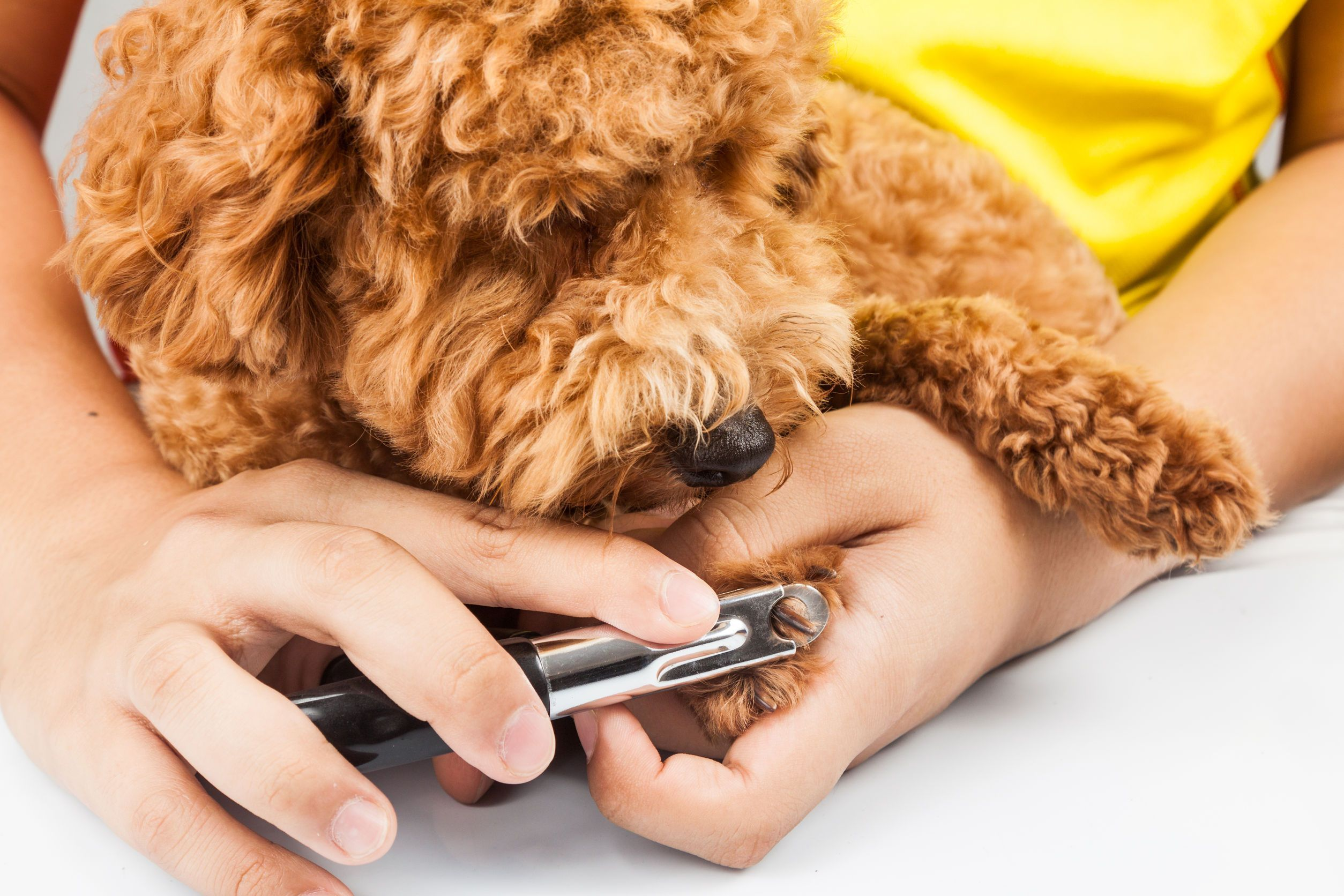 Dog Nail Yeast Infection Nail Ftempo