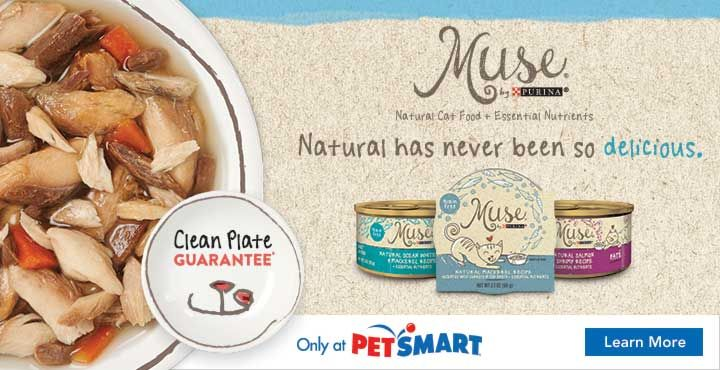 Five common litter box mistakes petmd natural cat food