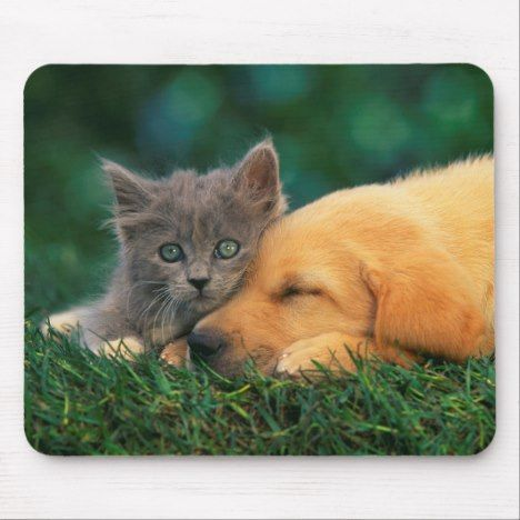 Cute little Kitten and puppy together Mouse Pad #dogs #puppies #cutepuppy #puppy #dog #cute #cuteanimal