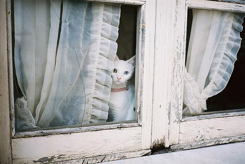 Os gatos possuem uma conexão com o mundo mágico, invisível. Assim como os cães são nossos guardiões no mundo físico, os gatos são nossos pr...