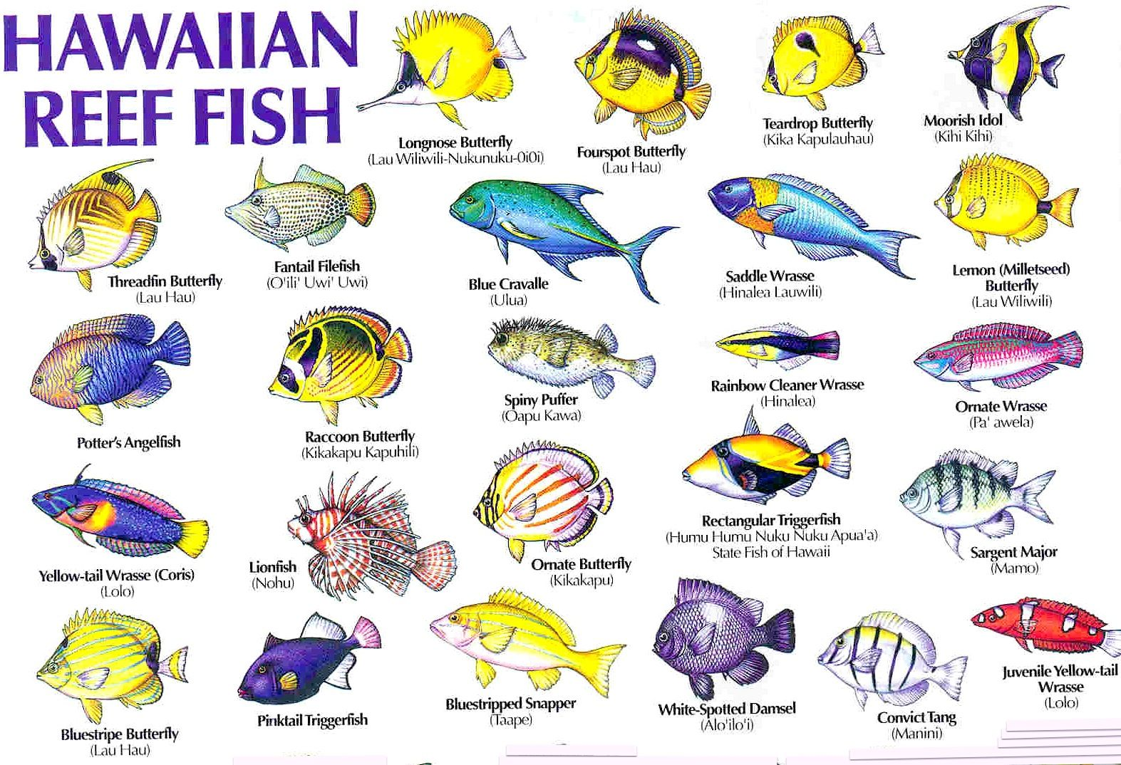 Coral Reef Animals Names | Hawaiian Coral Fish | UNDER THE ...