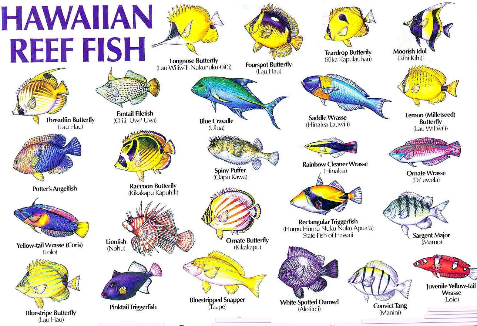 Aloha Joe In Hawaii A Visual Guide To Hawaii S Reef Fish Tropical Fish Fish Illustration Fish