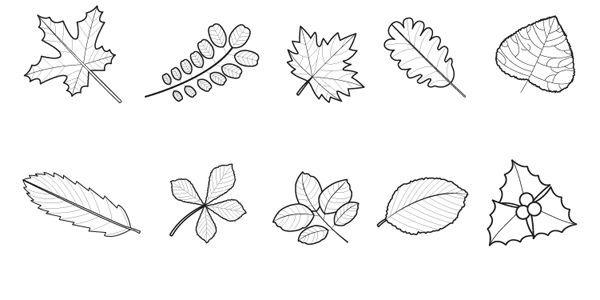 Hojas de árboles: dibujo para colorear e imprimir | naturaleza ...
