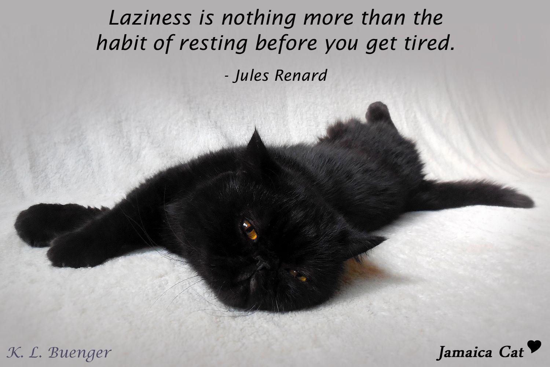 Black Cat Love! Black cat memes, Cat memes, Cats