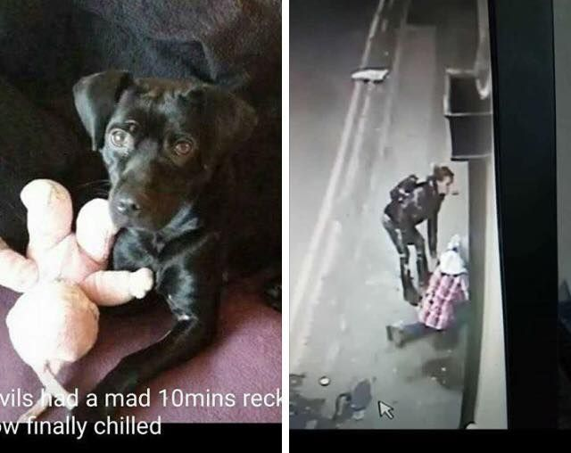 Stolen Leeds City Centre Do You Recognise These Two This Is