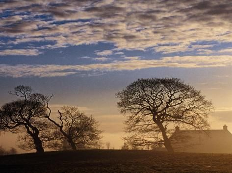 Trees and House Silhouetted in Winter Morning Light, Tyrone, Northern Ireland Photographic Pr...